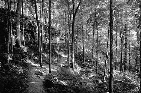KentuckyForest